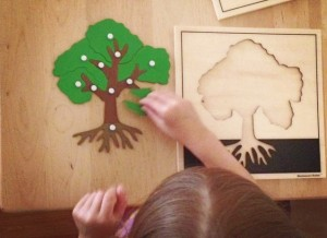 Josie tree