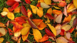 Nature___Seasons___Autumn_Autumn_leaves_075964_25